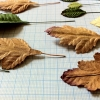 the pressed paper leaves are painted by immersion